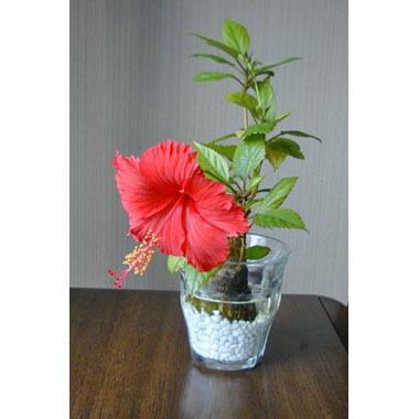 20010920_hibiscus