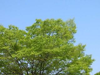 20050422_keyaki