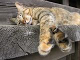 20050508_cat