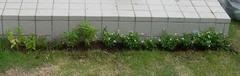 20050529_gardening1