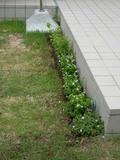 20050529_gardening2