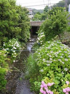 20050612_ajisai_river