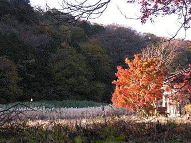 20051210_youfukuji