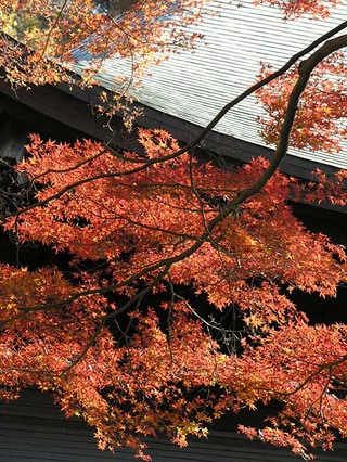 20051210_zuisenji