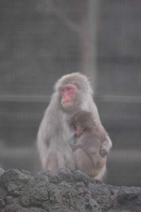 20060115_monkey