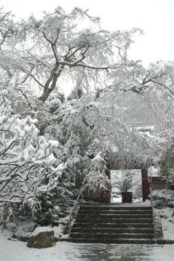 20060121_snow3_kosokuji