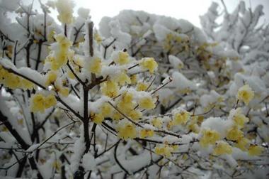 20060121_snow4_roubai