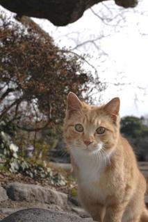 20060204_cat
