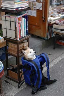 20060204_dog