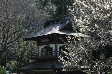 20060311_jouchiji2