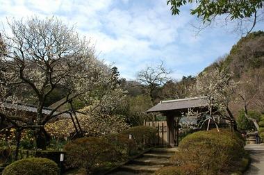 20060311_jouchiji