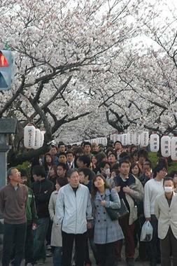 20060401_dankazura2