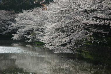 20060401_genpei