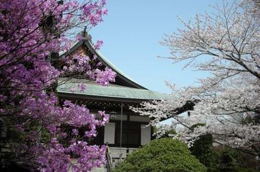 20060401_houkokuji
