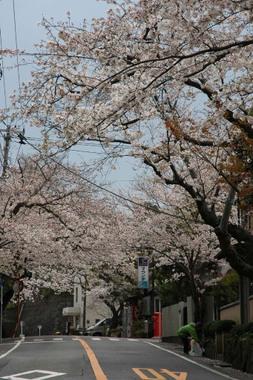 20060402_kamakurayama