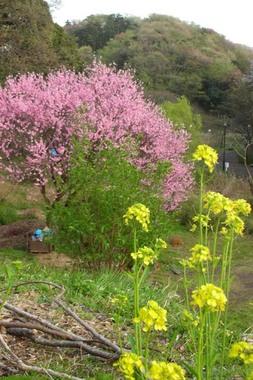 20060408_chuokouen