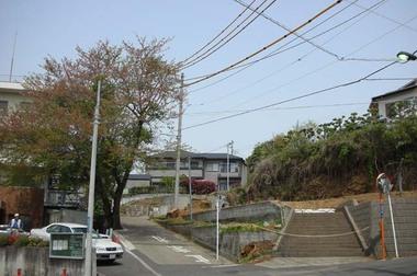 20060417_cherry_tree2