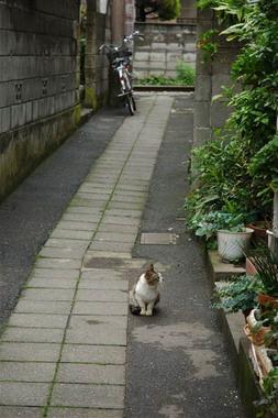 20060514_roji