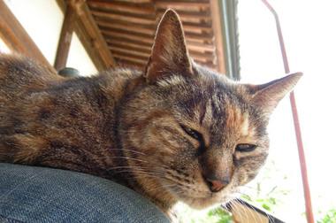 20060520_komyoji_cat_1