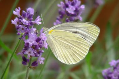 20060610_butterfly