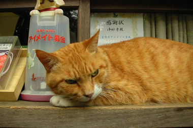20060611_jomyoji_cat_1