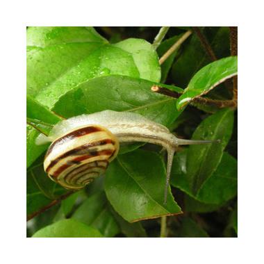 20060630_snail_2