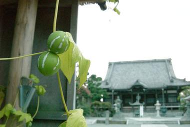20060903_hongakuji2