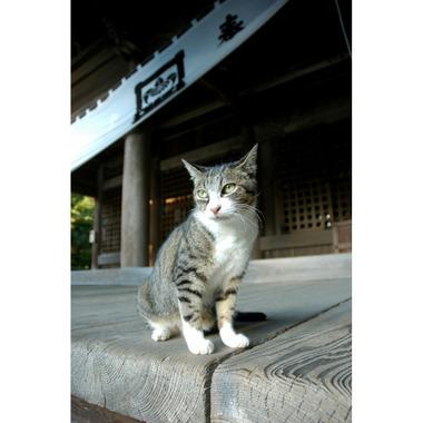 20060910_cat