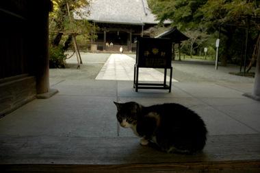 20061112_myohonji2