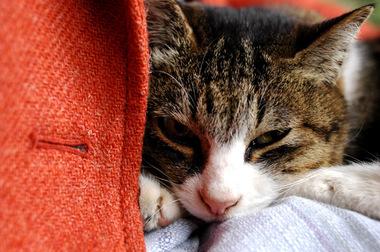 20061118_cat