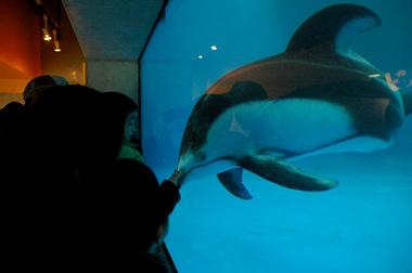 20061123_enosui_dolphin
