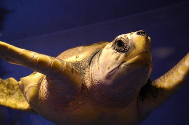 20061123_enosui_turtle