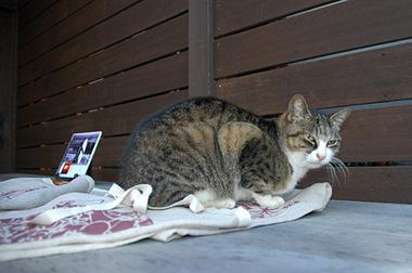 20061125_cat