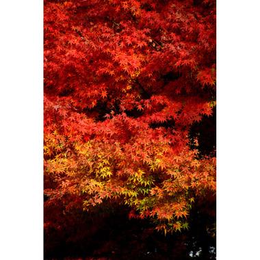 20061203_engakuji2