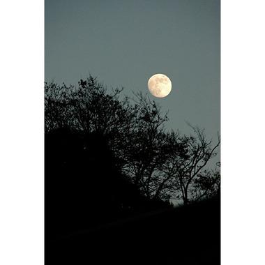 20061203_hachimangu_moon