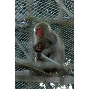 20061205_hirouyama_monkey