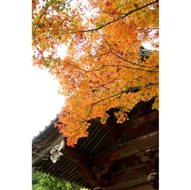 20061205_myohonji