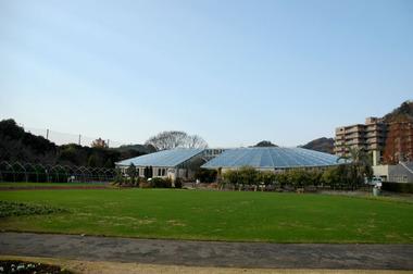 20061217_flower_center