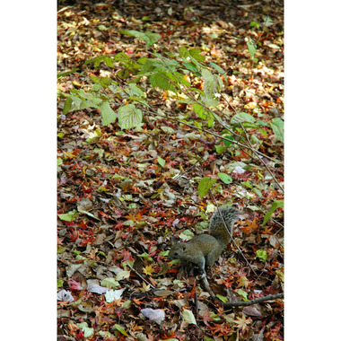 20061217_squirrel_1