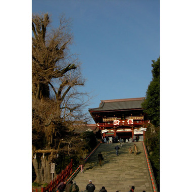 20061231_hachimangu