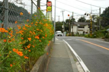 20070924_jochiji6