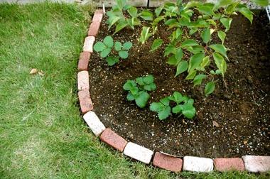 20071007_garden