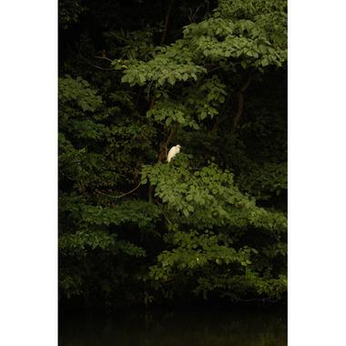 20071008_bird