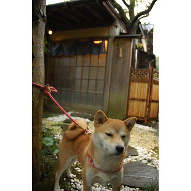 20071110_11_kofuku1