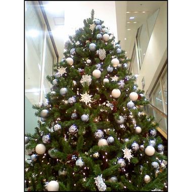 20071116_tree