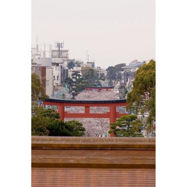 20070331_dankazura3_3