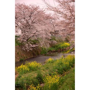 20070401_karasawagawa1