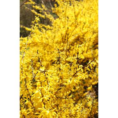 20070408_yellow