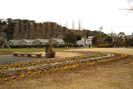 20080217_flower_center