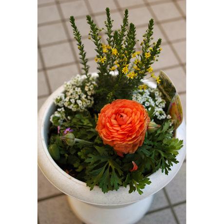 20080225_flowers_2